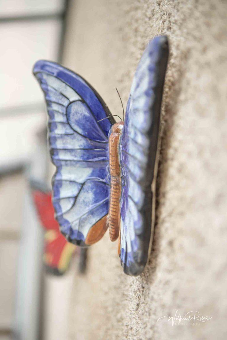 Gîte Papillon